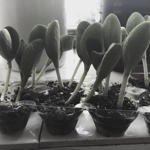 growingarts